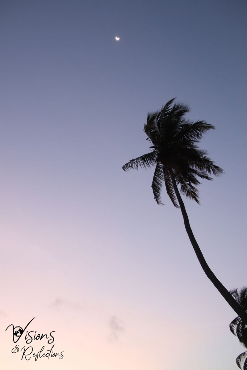 Moon and Palm Tree at Dusk